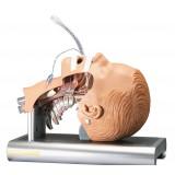 Intubationstrainer Ambu für Erwachsene